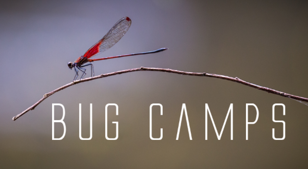 BugCamp #2 - Jan 2018! @ Cocobolo Nature Reserve
