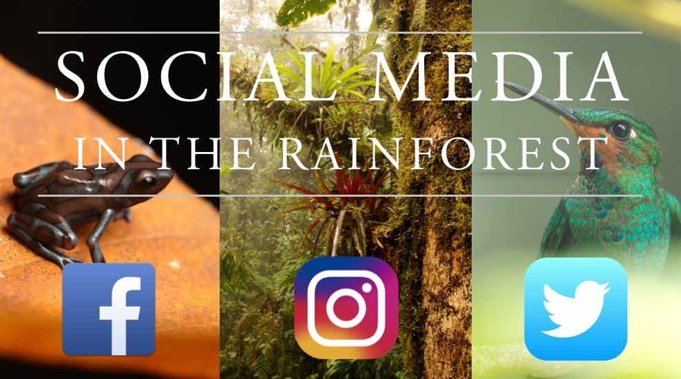 Social Media in the Rainforest